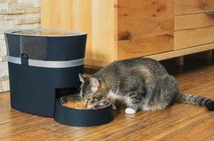 beste-automatische-voederautomaten-kat